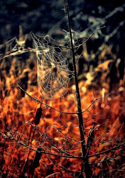 otoño_pinterest_tela-de-araña Una bienvenida al otoño